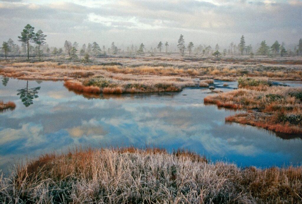 natuur in Estland